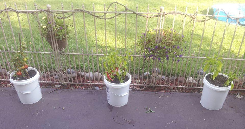 Vegetable garden anywhere 5 gallon buckets survive our for Gardening 5 gallon bucket